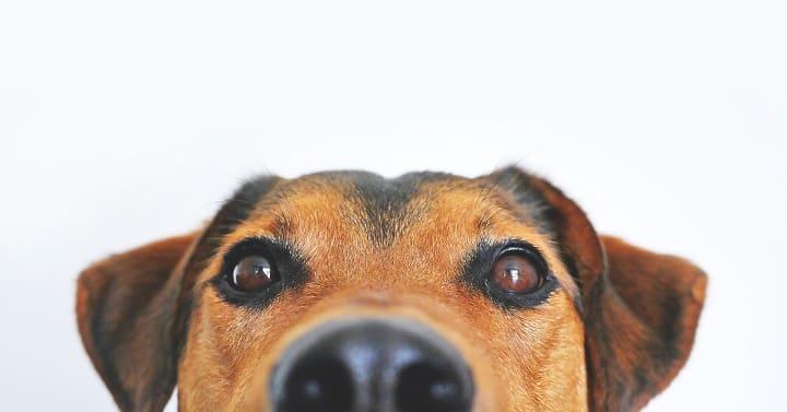 ミラブルは犬に使える?水圧や洗浄力は大丈夫?肌に安全?効果ある?1
