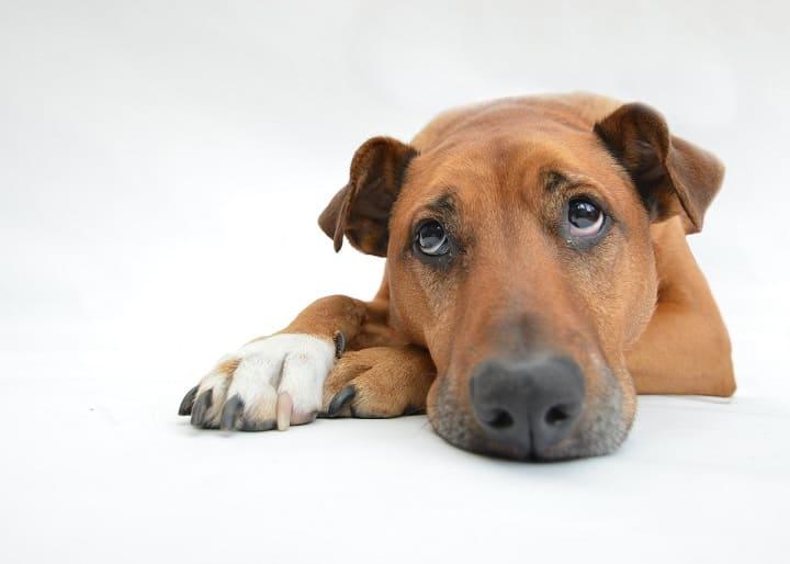ミラブルは犬に使える?水圧や洗浄力は大丈夫?肌に安全?効果ある?ミラブルを犬に使っても大丈夫?肌への影響や安全性