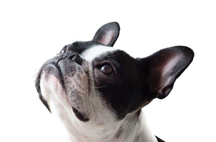 ミラブルは犬に使える?水圧や洗浄力は大丈夫?肌に安全?効果ある?ミラブルを犬やペットに使うと生まれる効果や変化