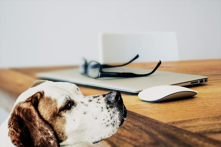 ミラブルは犬に使える?水圧や洗浄力は大丈夫?肌に安全?効果ある?ミラブルを愛犬やペットに使っている口コミ