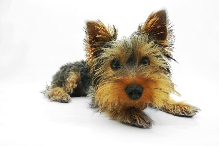 ミラブルは犬に使える?水圧や洗浄力は大丈夫?肌に安全?効果ある?ミラブルを買う前にこれだけは気を付けて!
