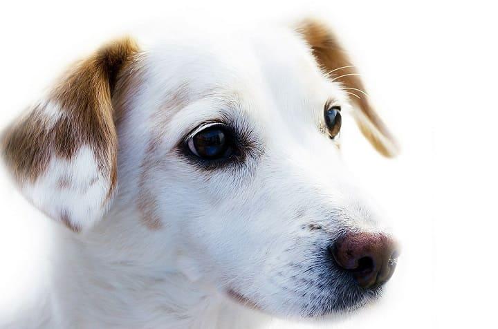 ミラブルは犬に使える?水圧や洗浄力は大丈夫?肌に安全?効果ある?ミラブルは犬やペットだけでなく家族みんなにおすすめ