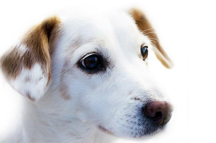ミラブルは犬に使える?水圧や洗浄力は大丈夫?肌に安全?効果ある?